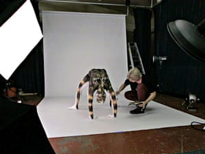 A contortionist is transformed into a human tarantula. The super-sized spider is the handiwork of body painter Emma Fay, 27, who used water-based paints to turn the ultra-flexible model into the giant arachnid.