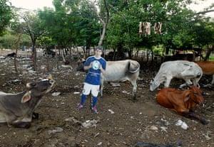 weird sport: A cardboard cutout of Messi is seen near cattle at a farm in Managua