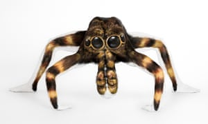 Human tarantula - The handiwork of body painter Emma Fay, 27, who used water-based paints to turn the ultra-flexible model into the giant arachnid