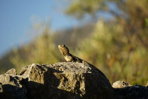 Your Pictures: Sunbathe: A lizard sitting in the sun