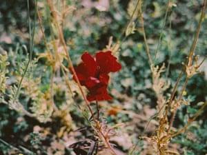 Flower in Pomona