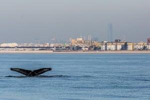New York whale
