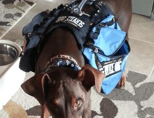Denial of Service Dog