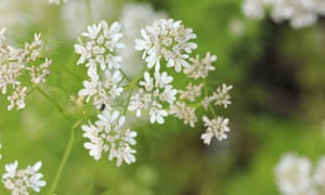 Ten of the best herbs to grow in containers   Life and style