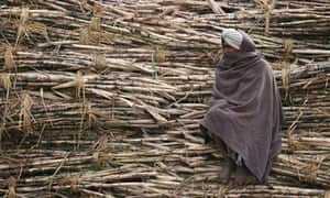 A farmer sits on a heap of sugarcane at roadside jaggery factory at Bhoothgarh village