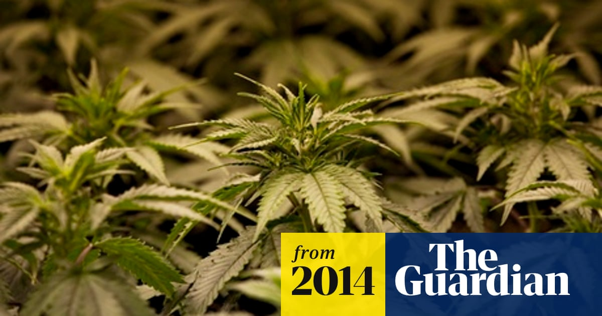 Drugs minister calls for legalising cannabis for medicinal