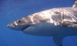 Google reinforces undersea cables after shark bites