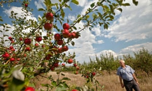 Moldovan farmer Sergiu Calmac stands at his apple orchard in Harbovat. Two weeks before Russia banned most food from the west, it placed a similar embargo on produce closer to home, in Moldova, which had sought deeper ties with the European Union.