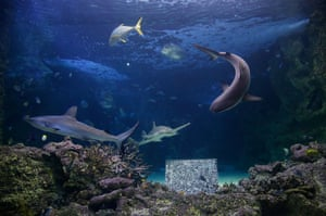 A submerged artwork by BJ Price is seen at Sydney Aquarium at Darling Harbour