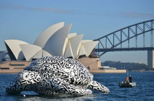 A fifteen-metre long sea turtle is towed around Sydney Harbour
