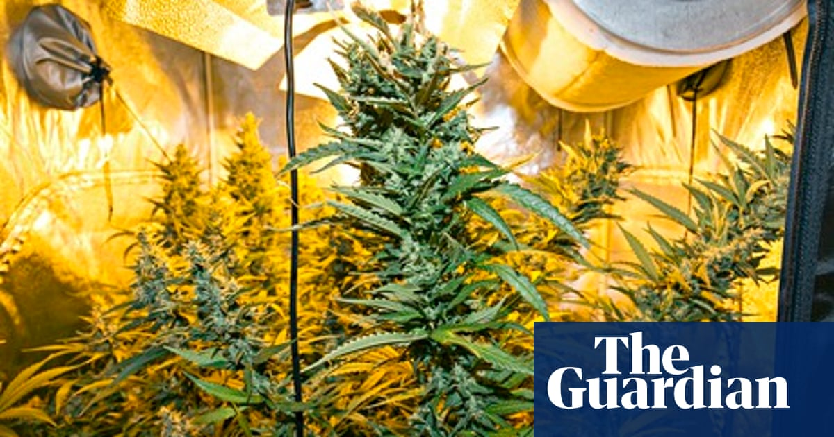 Medicinal cannabis and the caregiving community giving it