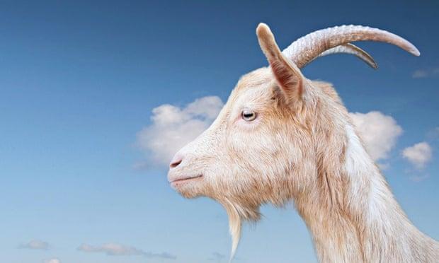 nasty goats game online