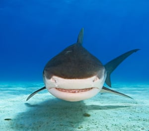 Sharks are, literally, attacking the internet.