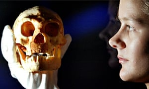 Flores hobbit skull model