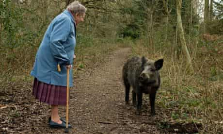 Wild boar meets pensioner in the Forest of Dean