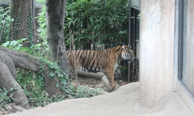 advantages of keeping animals in captivity