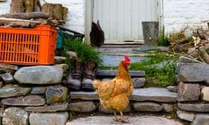 Farm door