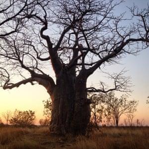 guardian africa instagram