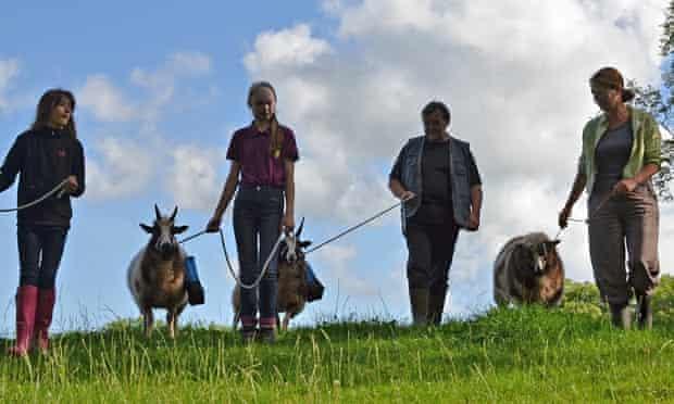 sheep trekking in Wales