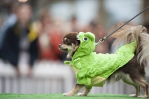 A dog is dressed up as a dinosaur by its owner.