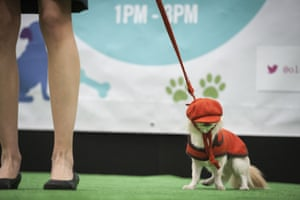 A dog's hat slips over its eyes on the ''Dog Walk'' at the 2014 Paw Pageant.