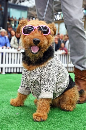 80's inspired competitor poses for photographs during the best dressed dogs competition.