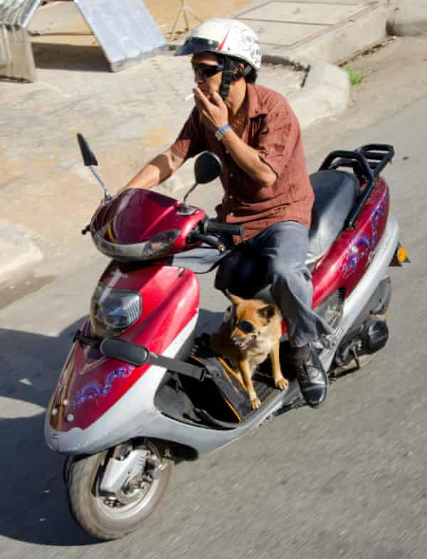 man and dog on scooter in Saigon
