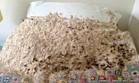 Giant wasps' nest found in Winchester home