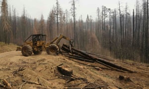 An active logging site is pictured among burned trees from the Rim fire near Groveland, California.