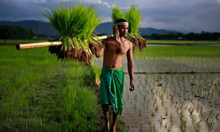 Indian paddy farmer