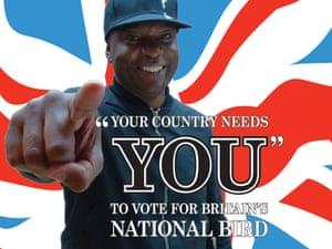 bird vote