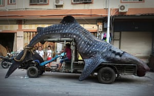 A fisherman transports a five-metre-long dead whale shark after it was caught in Yangzhi county,  China