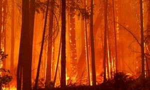 Trees burn as flames move towards the City of Berkeley's Toulumne Family Camp near Groveland, California in August 2013. Global warming creates conditions that intensify wildfires and the costs of fighting them.