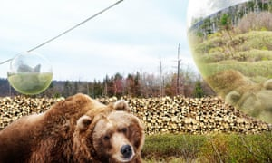 Fly-by viewing … Visitors will float above bears' heads on a cable car.