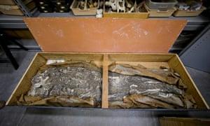 Penn Museum skeleton