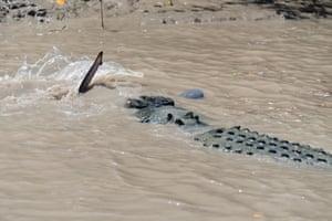 Crocodile shark struggle