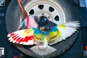 Birds in tyre, as featured in Paloma Al Aire by Richard Cases