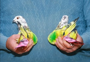 Breeder holds pair of birds, as featured in Paloma Al Aire by Richard Cases