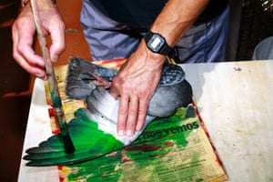 Breeder painting a bird, as featured in Paloma Al Aire by Richard Cases