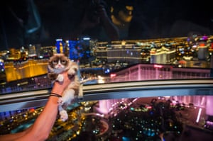 Grumpy Cat rides the High Roller Observation Wheel after her book signing at Kitson at The Linq in Las Vegas