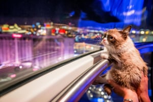 Grumpy Cat looks out the window of the High Roller Observation Wheel after her book signing