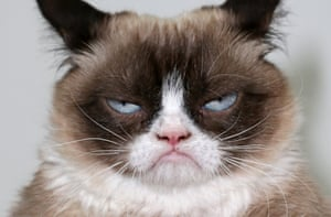 Grumpy Cat looking even more grumpy than usual