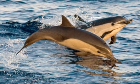 Dolphins off the coast of Mexico