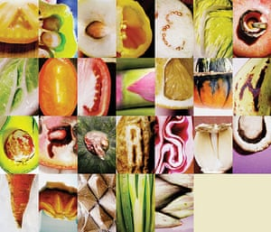 Snapshot: Fruits & Veggies