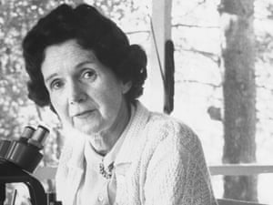 Biologist/author Rachel Carson working with microscope at her home