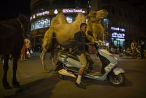 A Uighur man rides a scooter while holding a camel and horse.