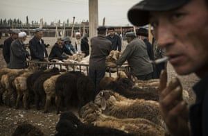 Men inspect sheep for sale at a livestock market.