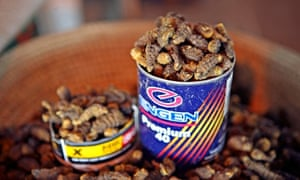 Dried and smoked Mopane worms in Namibia