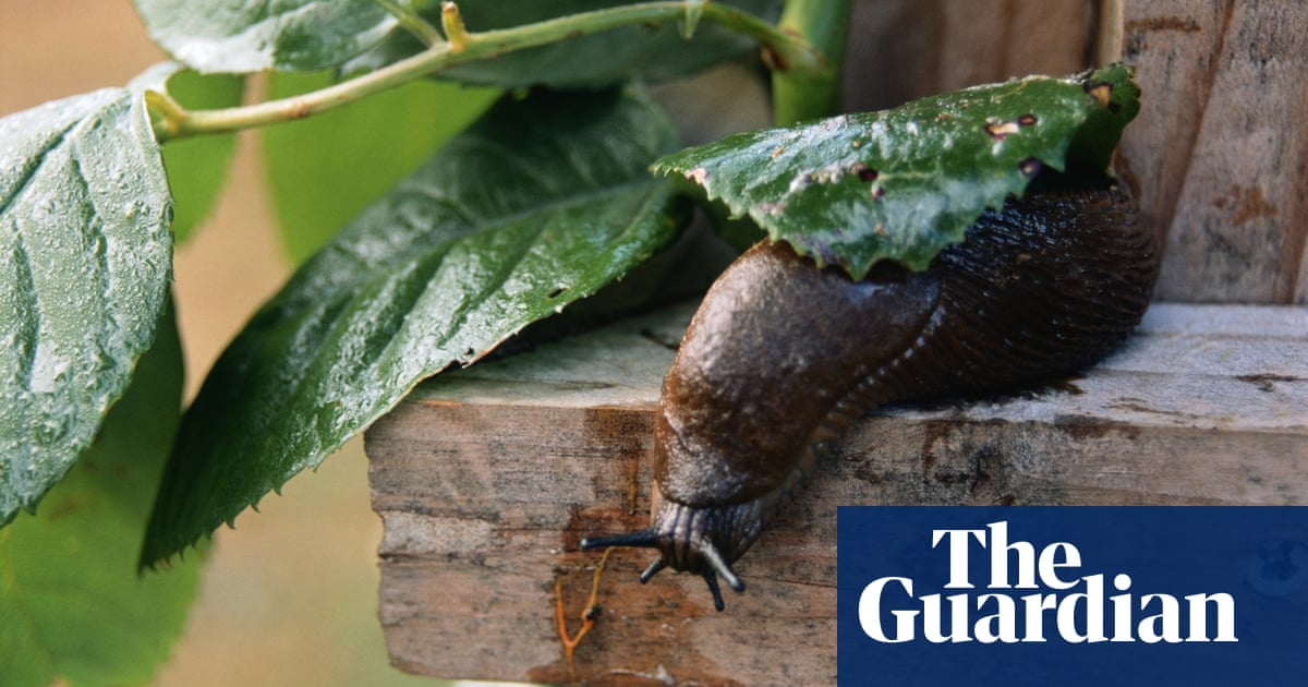 Five Steps For Gardeners To Take Control Of Slugs The Natural Way