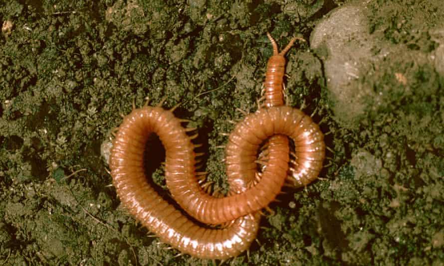 Live Better: Natural slug control